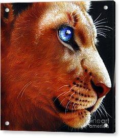 Young Lion Acrylic Print by Jurek Zamoyski