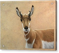 Young Pronghorn Acrylic Print by James W Johnson