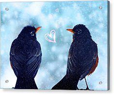Young Robins In Love Acrylic Print by Lisa Knechtel
