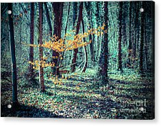 Youngster Acrylic Print by Hannes Cmarits