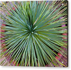 Yucca 2 Acrylic Print by Frank Tozier