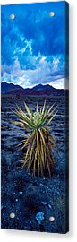 Yucca Flower In Red Rock Canyon Acrylic Print by Panoramic Images