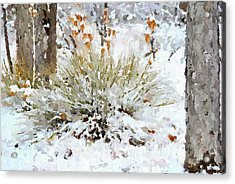 Yucca In The Snow Acrylic Print by John Cullum