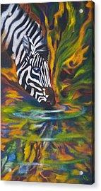 Zebra Acrylic Print by Kd Neeley