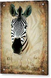 Zebra Profile Acrylic Print by Ronel Broderick