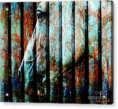 Zeniah Variation 11 Acrylic Print by Judy Wood