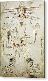 Zodiacal Man, 15th Century Acrylic Print by Spl