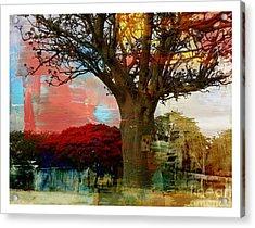 Baobab Acrylic Print by Fania Simon