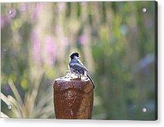 Bird Bathing In My Fountain 2 Acrylic Print by Michel DesRoches