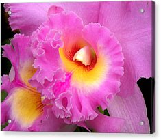 Cattleya Orchid 1 Acrylic Print by Julie Palencia