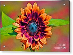 Orange Flowers In Their Buttonholes Acrylic Print by Gwyn Newcombe