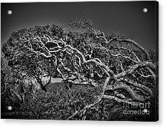 Trees Please Acrylic Print by Richard Burr