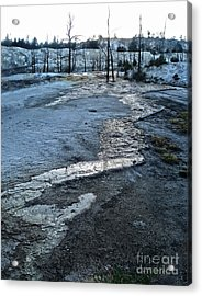 Yellowstone National Park - Minerva Terrace - Desolation Acrylic Print by Gregory Dyer