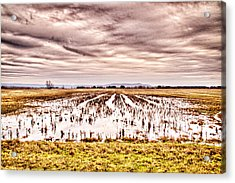 0704-8703 Winter Clouds At Holla Bend Wildlife Refuge Acrylic Print by Randy Forrester