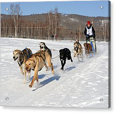 2010 Limited North American Sled Dog Race Acrylic Print by Gary Whitton