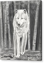 Arctic Wolf Acrylic Print by Christian Conner