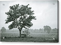 August In England Acrylic Print by Andy Smy