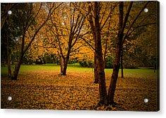 Autumn Acrylic Print by Micael  Carlsson