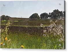 Beautiful California Vineyard Framed With Flowers Acrylic Print by Brandon Bourdages