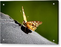 Butterfly Kisses Acrylic Print by Karen M Scovill