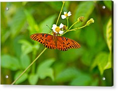 Butterfly Acrylic Print by Wild Expressions Photography