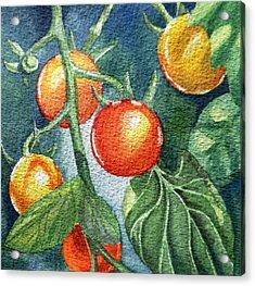 Cherry Tomatoes Acrylic Print by Irina Sztukowski