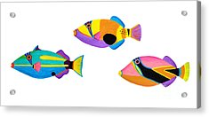 Collection Of Trigger Fishes Acrylic Print by Opas Chotiphantawanon