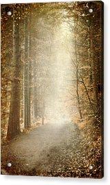 Early Morning Acrylic Print by Svetlana Sewell