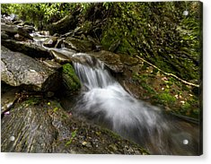 Enchanted Forest Acrylic Print by Debra and Dave Vanderlaan