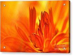 Fire Storm  Acrylic Print by Elaine Manley