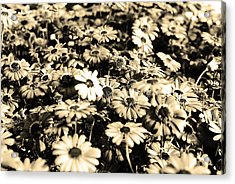 Flowers In Sepia Tone Acrylic Print by Sumit Mehndiratta