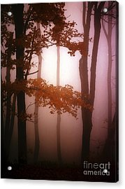 Foggy Misty Trees Acrylic Print by Mike Nellums