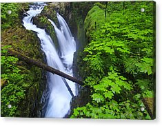 Forest And Stream In The Olympic Forest Acrylic Print by Gavriel Jecan