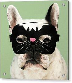French Bulldog Acrylic Print by Retales Botijero