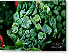 Fresh Chives Acrylic Print by Susan Herber