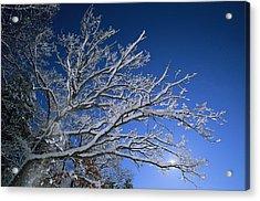 Fresh Snowfall Blankets Tree Branches Acrylic Print by Tim Laman