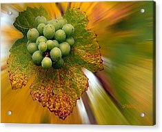 Grapes Acrylic Print by Jean Noren