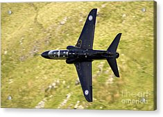 Hawk In Mach Loop Acrylic Print by Angel  Tarantella