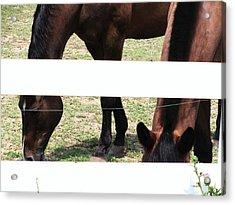 Horse-3 Acrylic Print by Todd Sherlock