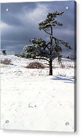 Iced Tree Shenandoah National Park Acrylic Print by Thomas R Fletcher
