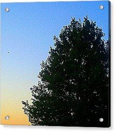 #instadroid #andrography #nexuss #tree Acrylic Print by Kel Hill