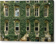 Ivy League Acrylic Print by John Greim