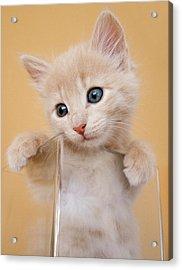 Kitten In Glass Vase Acrylic Print by Sanna Pudas