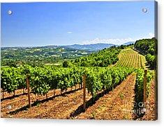 Landscape With Vineyard Acrylic Print by Elena Elisseeva
