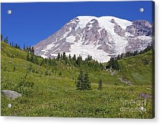 Mount Rainier Meadow Acrylic Print by Sean Griffin