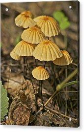 Mushrooms Acrylic Print by Michael Peychich
