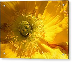 Natures Wonder Acrylic Print by Bruce Bley