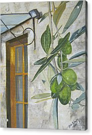 Olives In Tuscany Acrylic Print by John Schuller