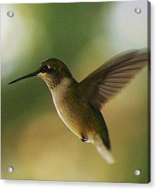 On The Fly Acrylic Print by Bruce Bley