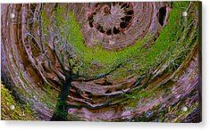 Orb Acrylic Print by Jean Noren